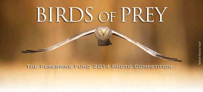 Birds of Prey 2014 Photo Competition