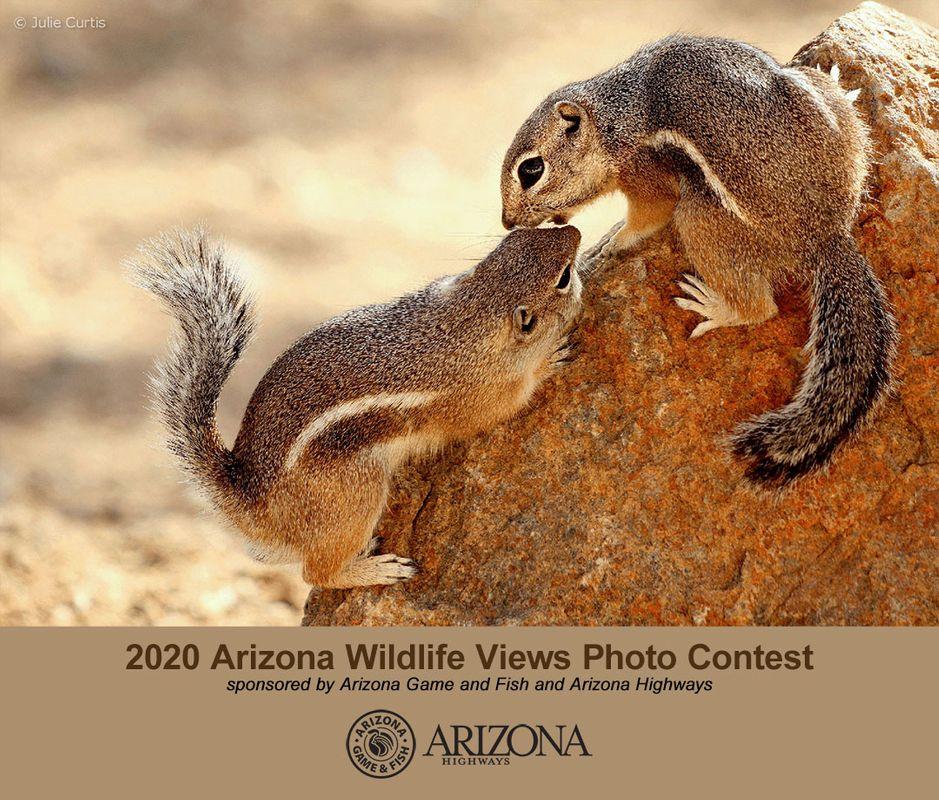2020 Arizona Wildlife Views Photo Contest